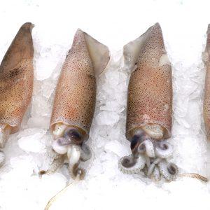Calamaro piccolo